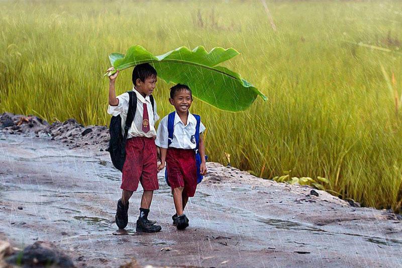 banana-leaf-rain-indonesia