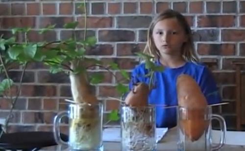 organit-food-experiment-girl
