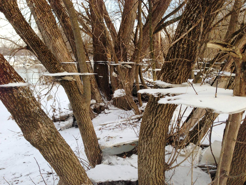 tree-ice-and-snow-flood-trippy-effect