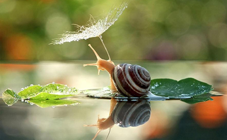 magical_snail