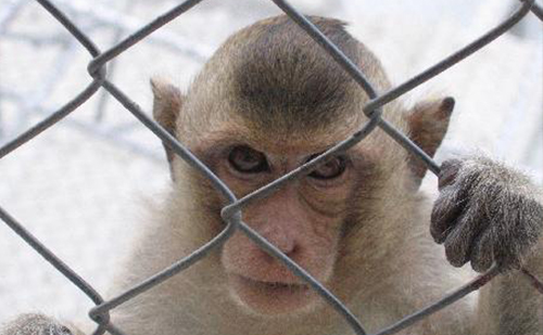This Experiment With 5 Monkeys In A Cage Will Teach You