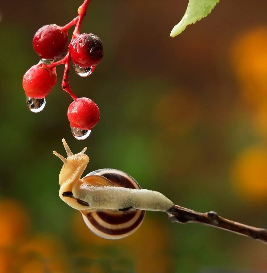 snail-14