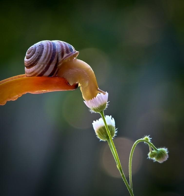 snail-15