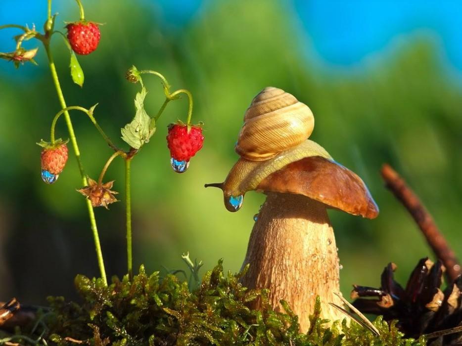 snail-7