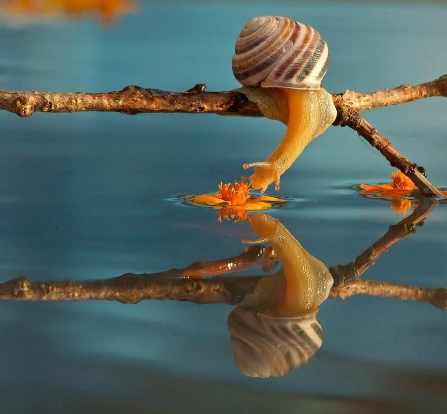 snail-9