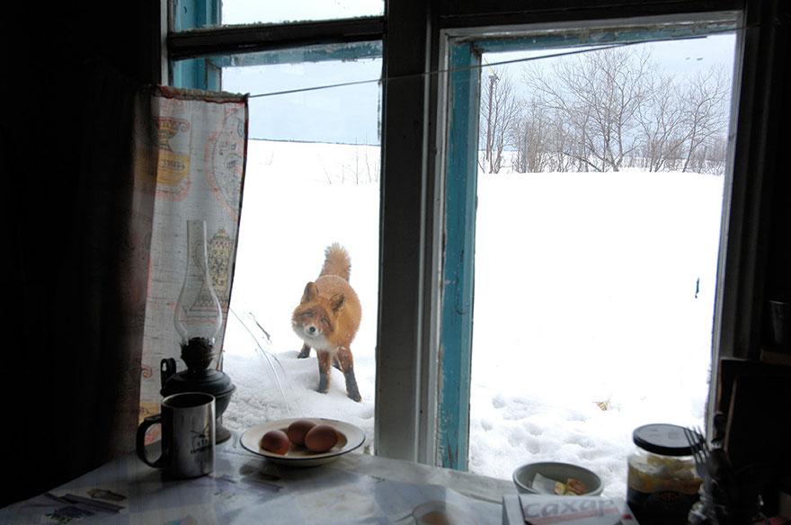 beautiful-fox-photos-13