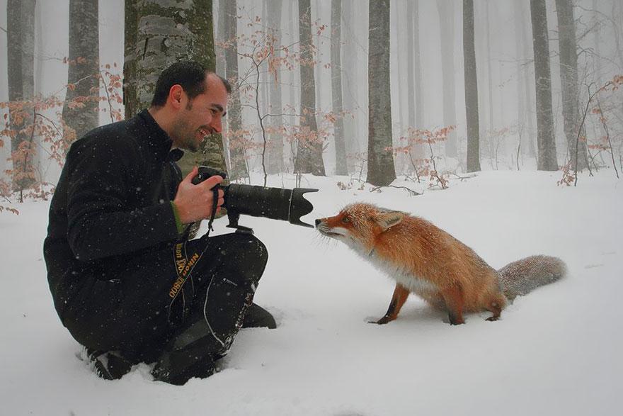 beautiful-fox-photos-16