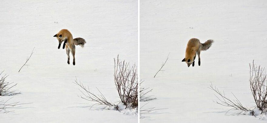 beautiful-fox-photos-18