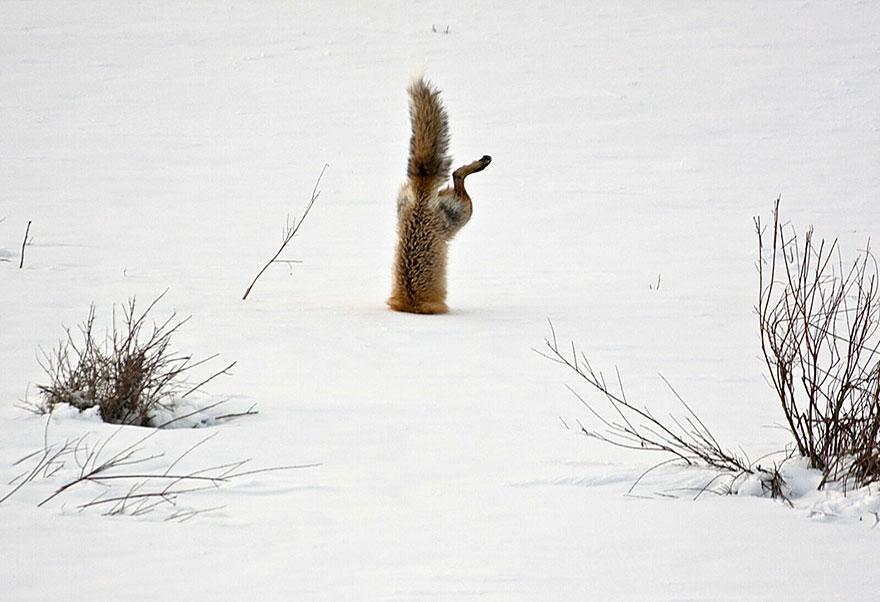 beautiful-fox-photos-19