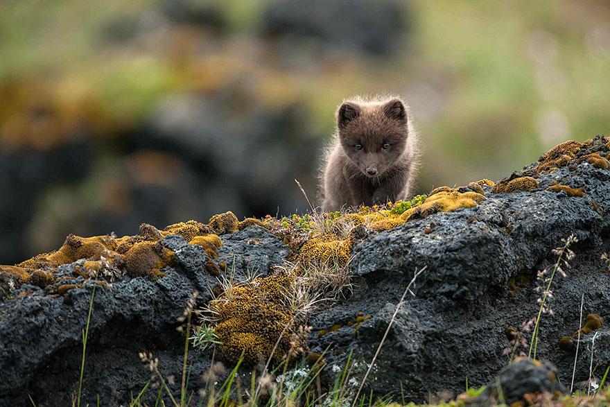 beautiful-fox-photos-6