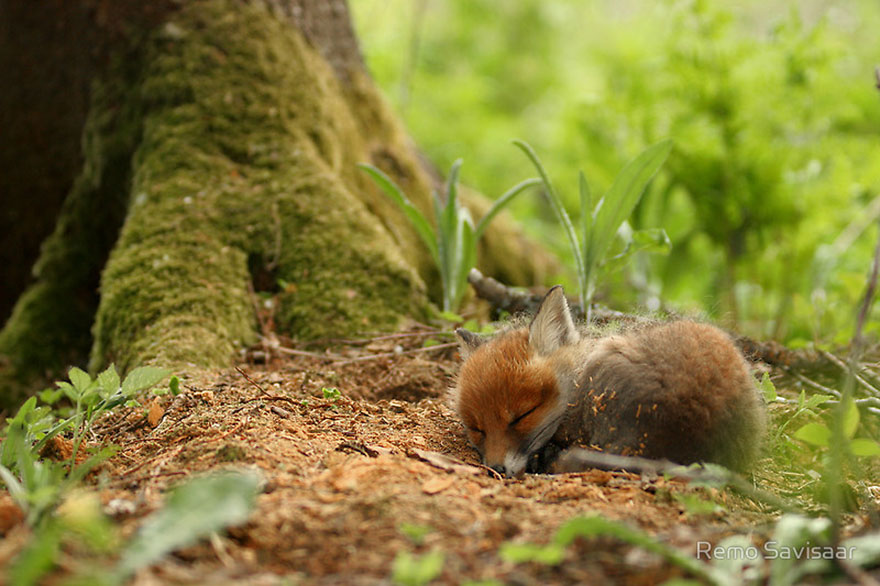beautiful-fox-photos-8