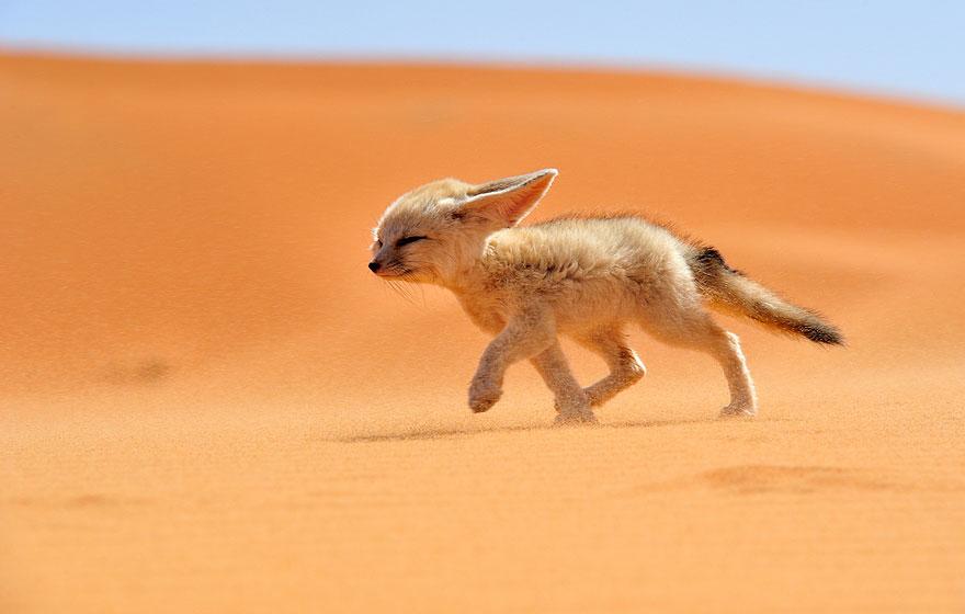 beautiful-fox-photos-9