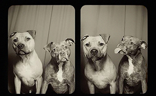 dogs-licking-photo-booth