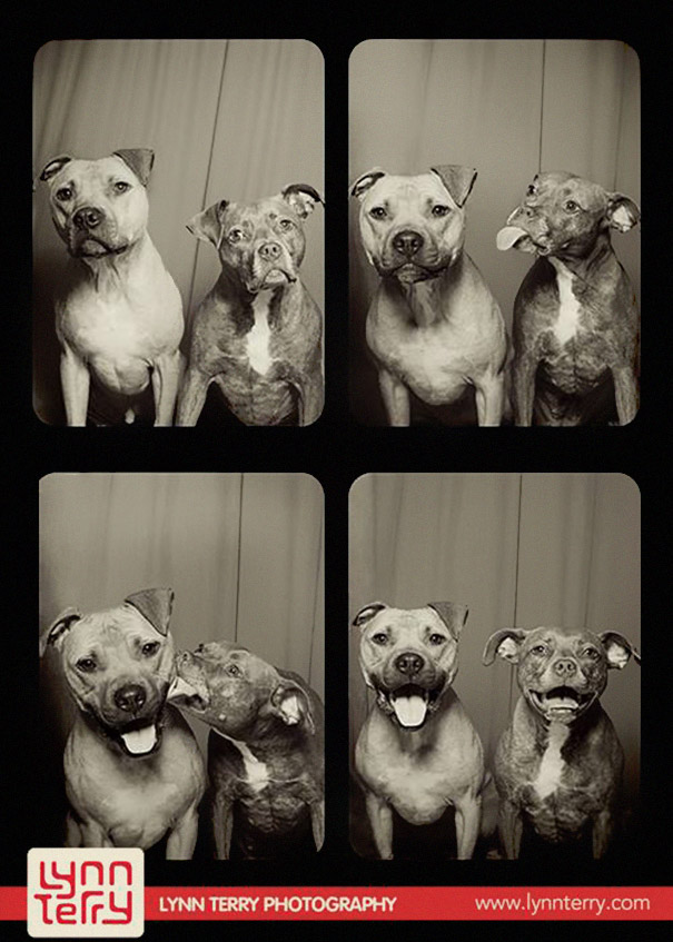 dogs-photo-booth-1