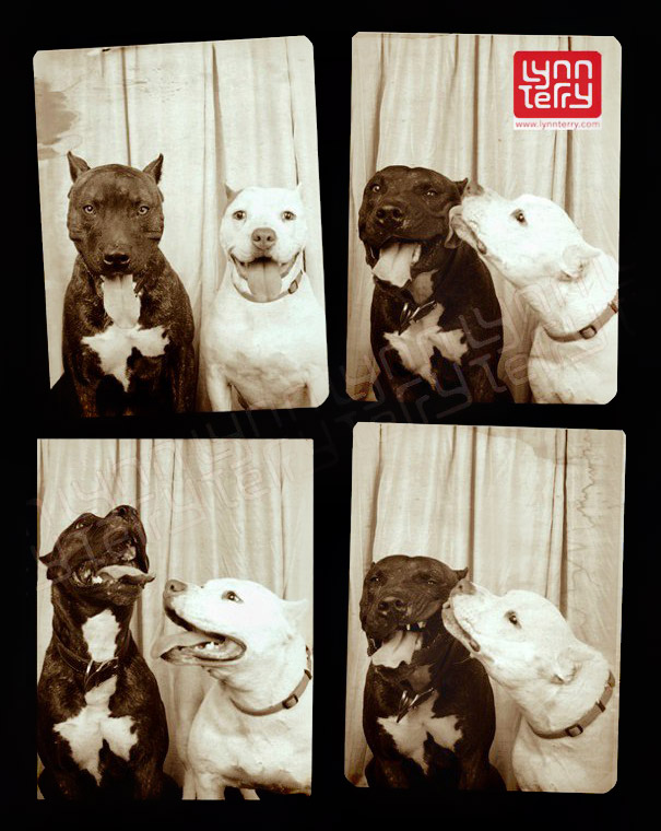 dogs-photo-booth-2