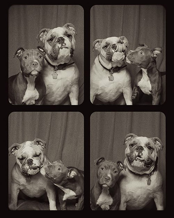 dogs-photo-booth-3