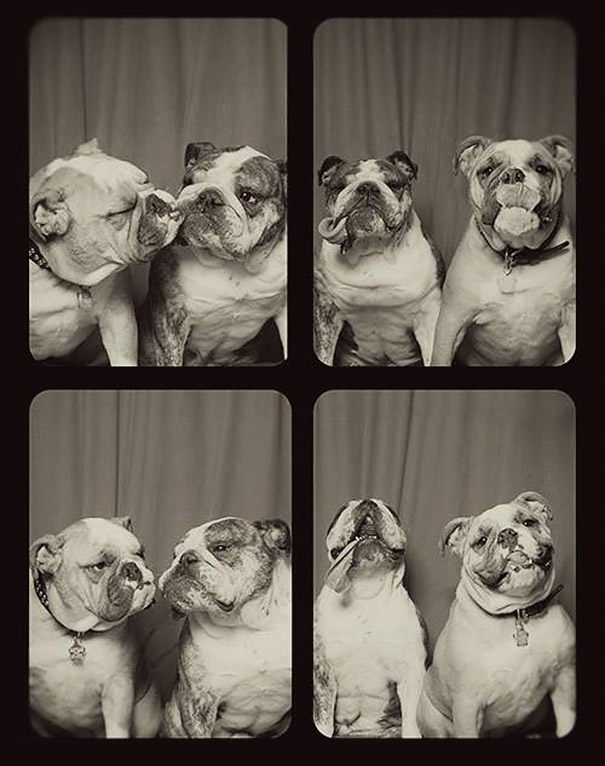 dogs-photo-booth-4