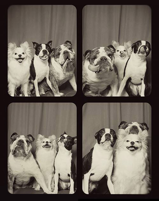 dogs-photo-booth-5