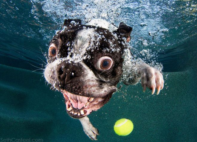 funny-underwater-dog-photos-1