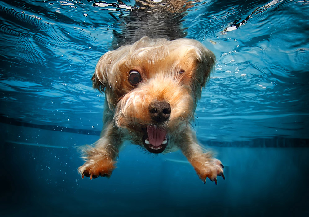 funny-underwater-dog-photos-10