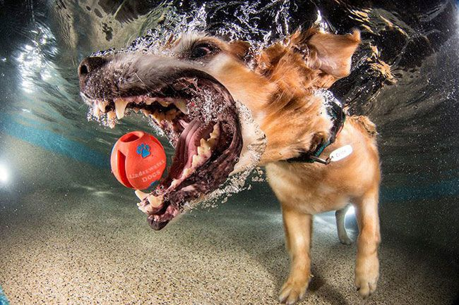 15 Hilarious Photos Of Dogs Trying To Fetch A Ball