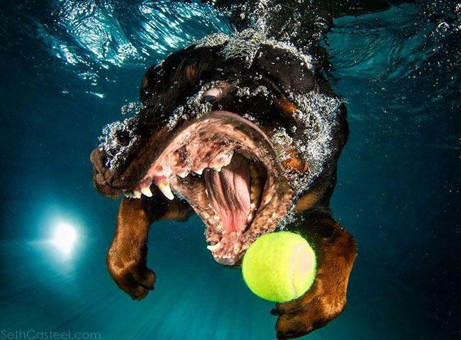 funny-underwater-dog-photos-12