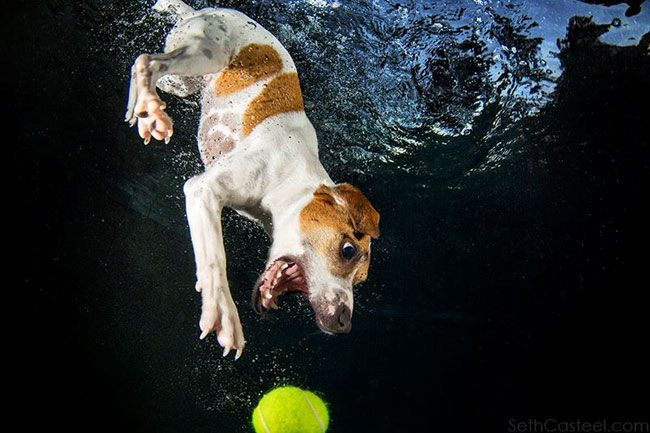 funny-underwater-dog-photos-13