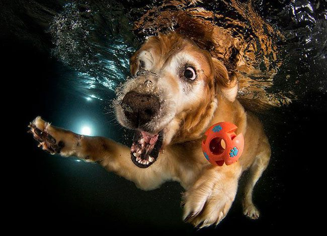 funny-underwater-dog-photos-14