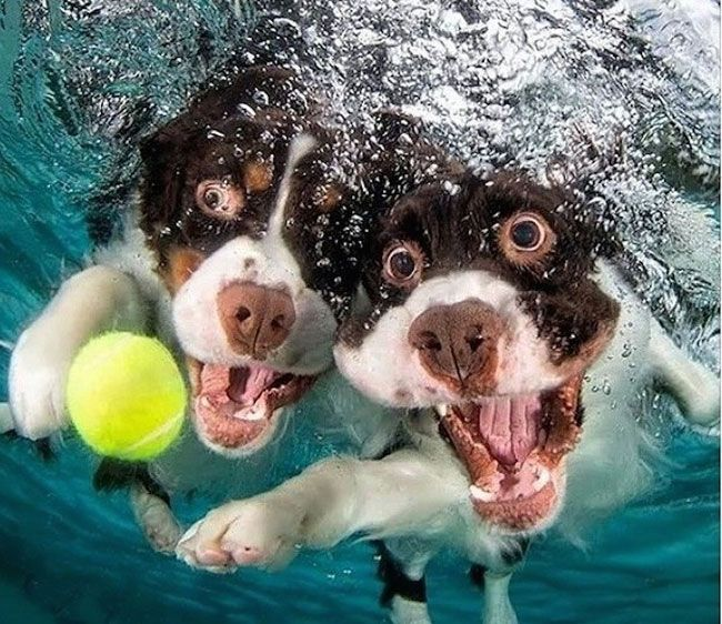 funny-underwater-dog-photos-15