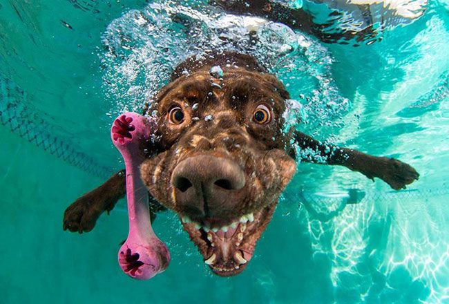 funny-underwater-dog-photos-3