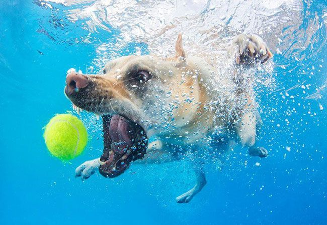 funny-underwater-dog-photos-5
