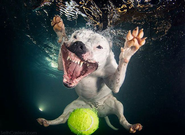 funny-underwater-dog-photos-7