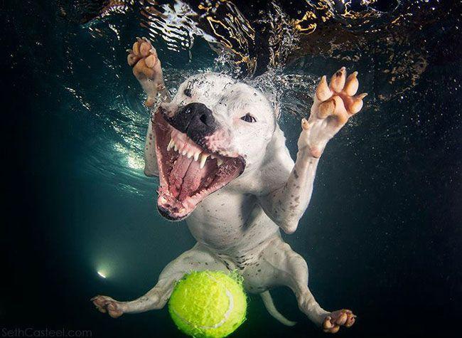 funny-underwater-dog-photos-7