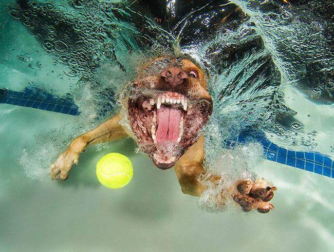 funny-underwater-dog-photos-8