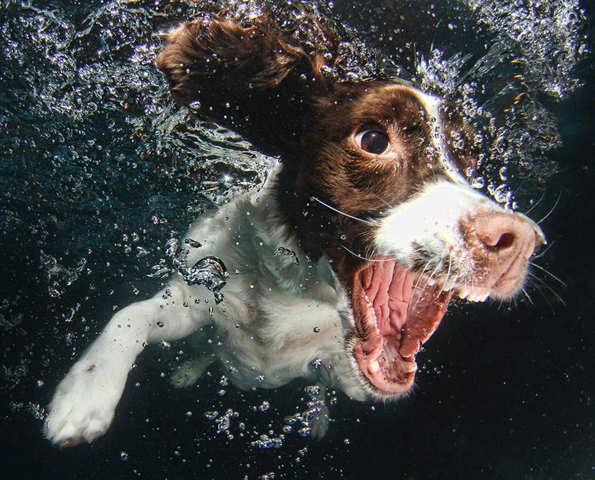 funny-underwater-dog-photos-9