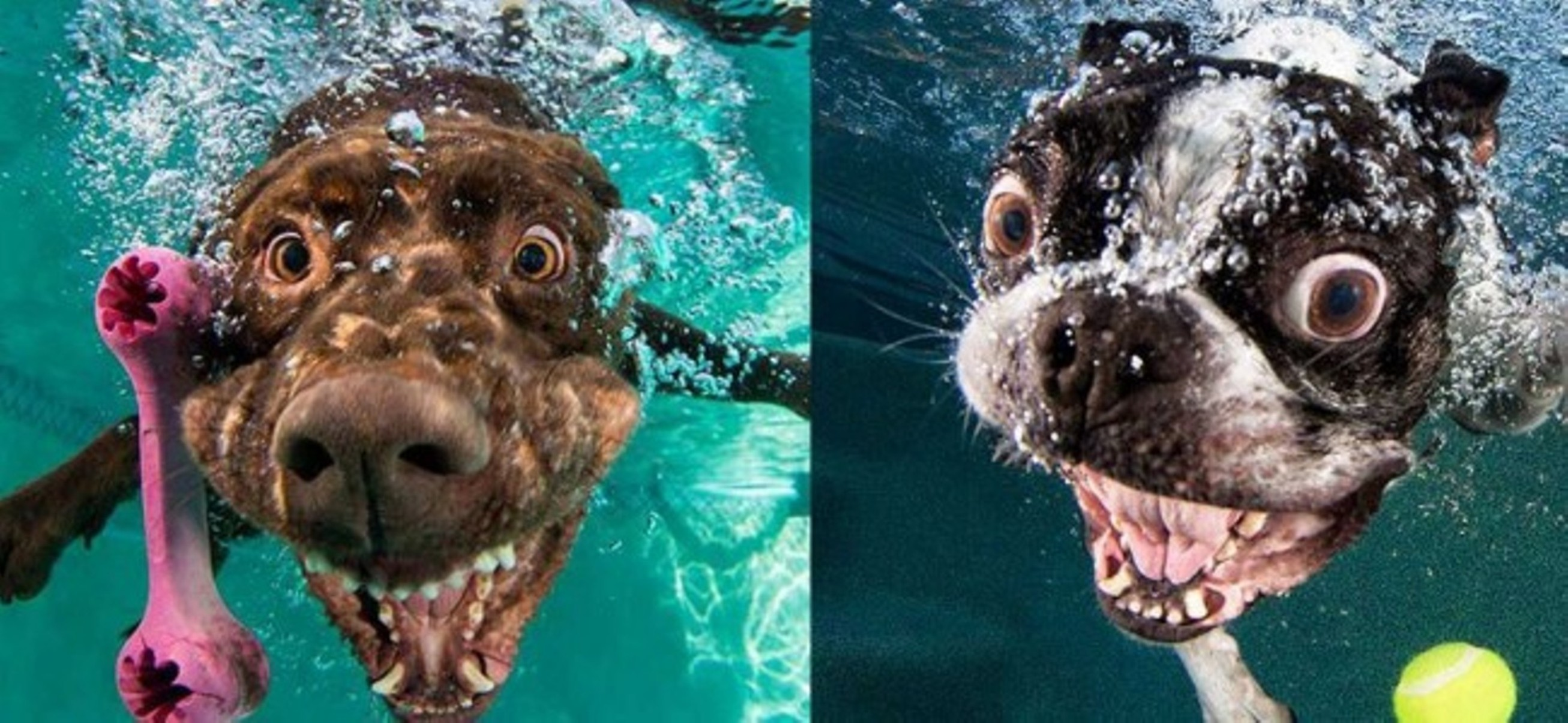 Dogs With People S Faces