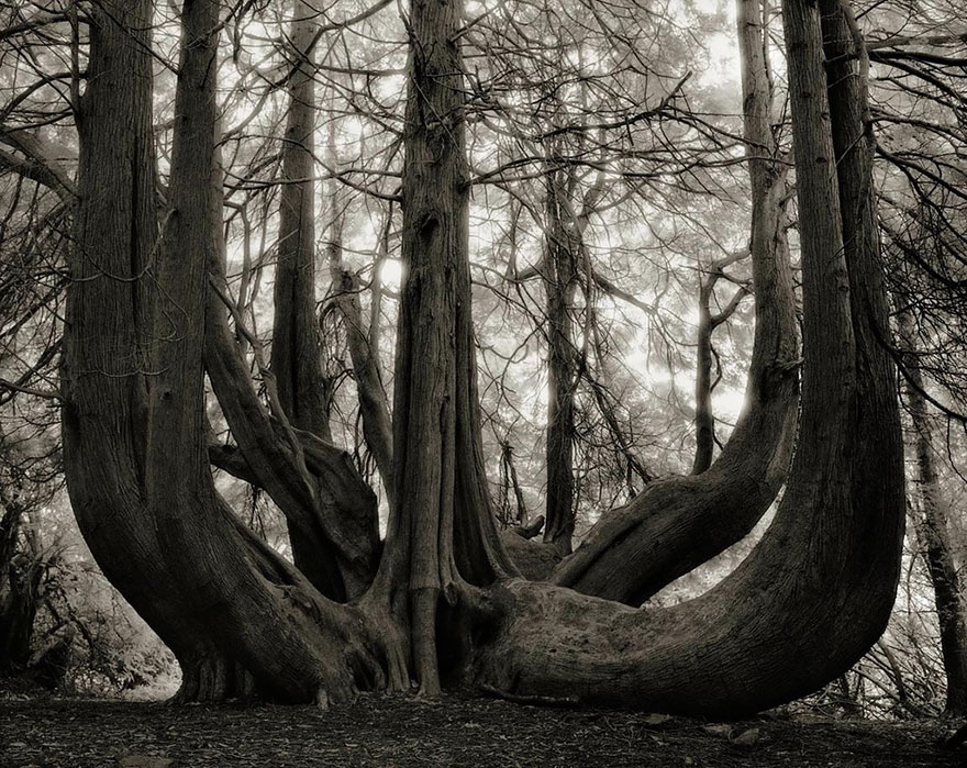 ancient-trees-beth-moon-20