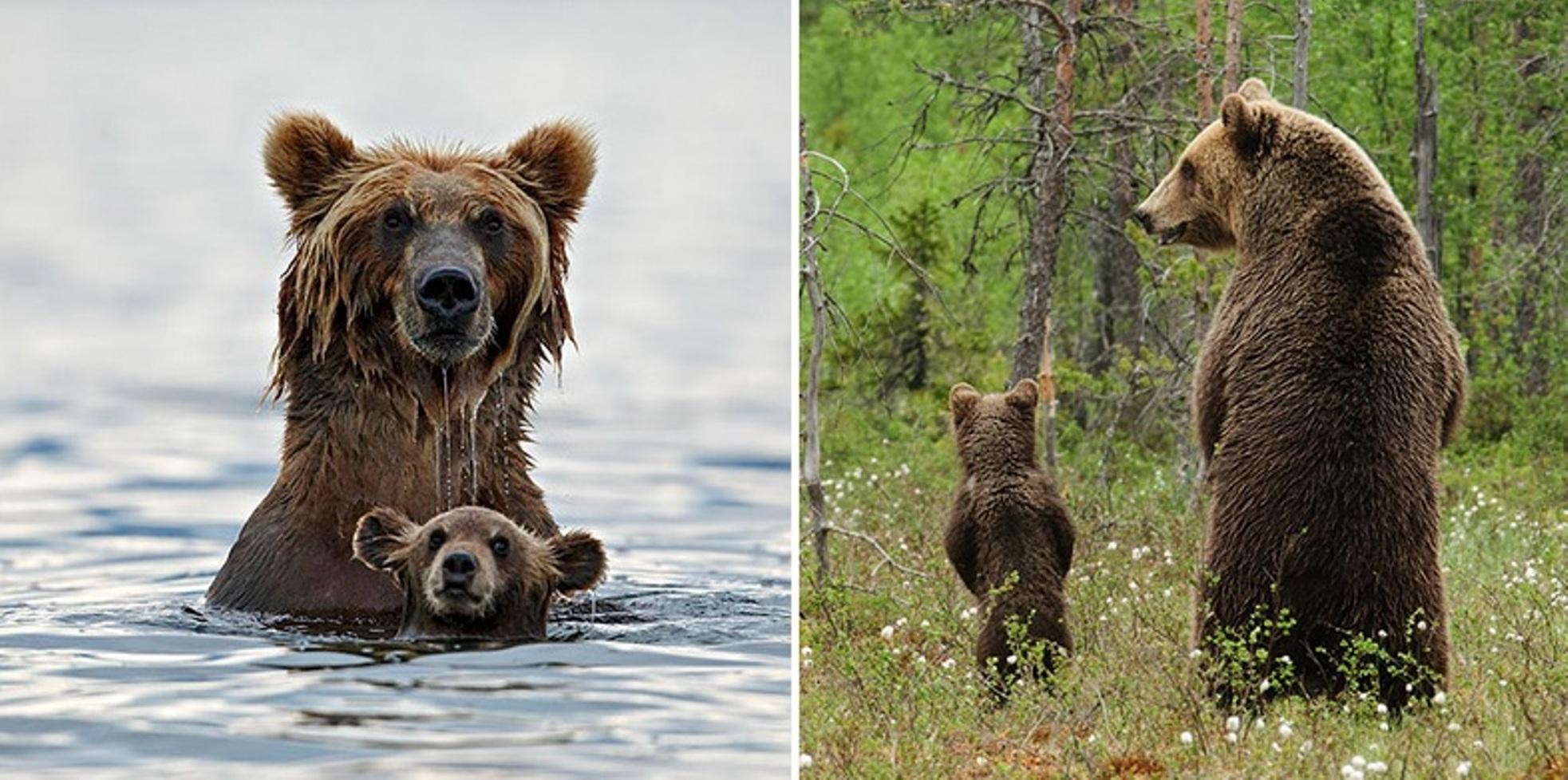bear-mommy