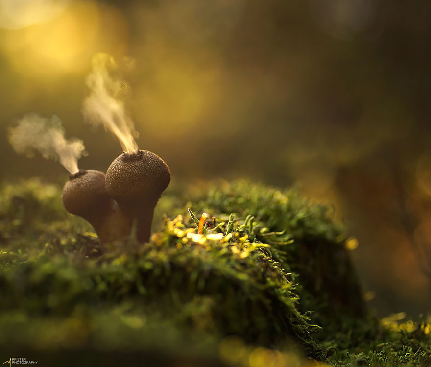 mushroom-photography-1