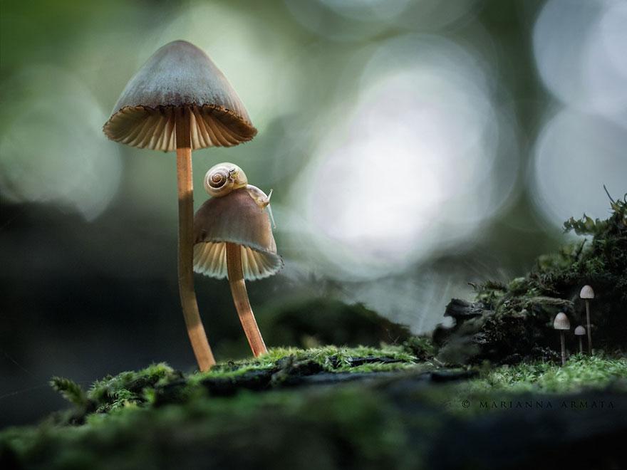 mushroom-photography-14