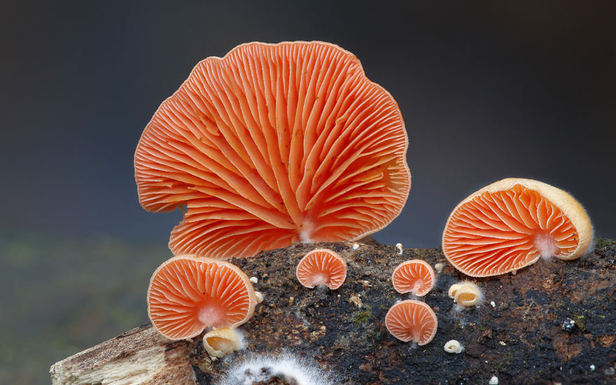 mushroom-photography-18