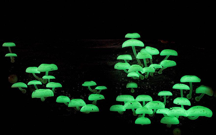 mushroom-photography-2