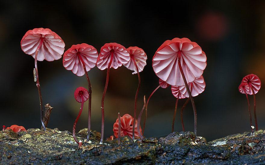 mushroom-photography-3