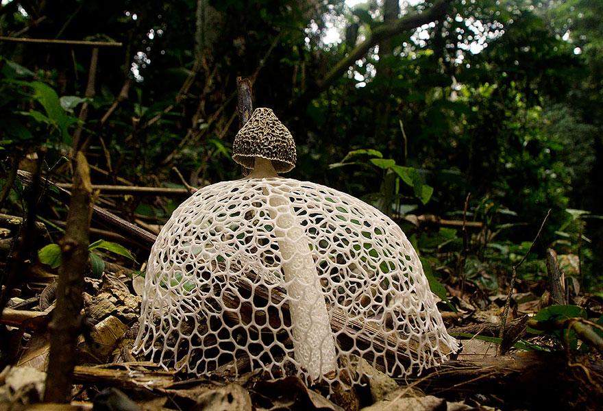 mushroom-photography-5