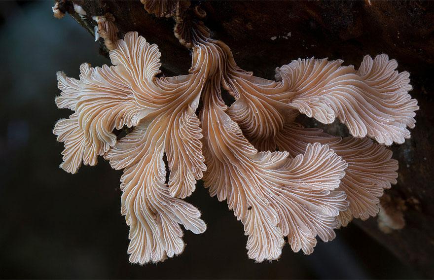 mushroom-photography-7