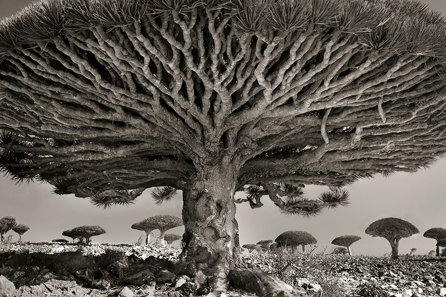oldest-trees-beth-moon-1