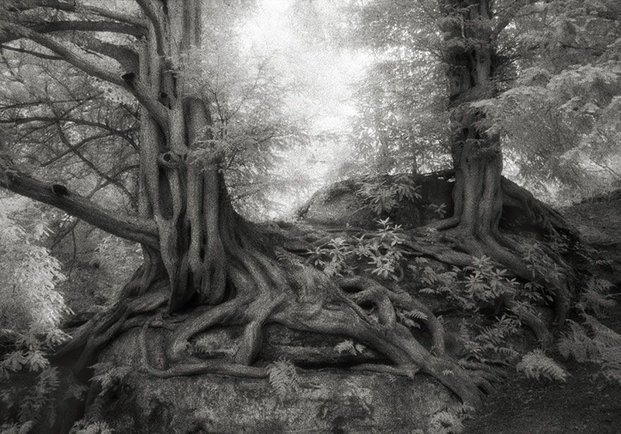 oldest-trees-beth-moon-10