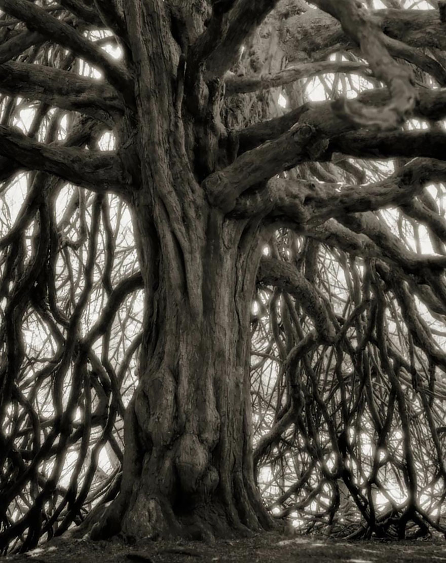 oldest-trees-beth-moon-15