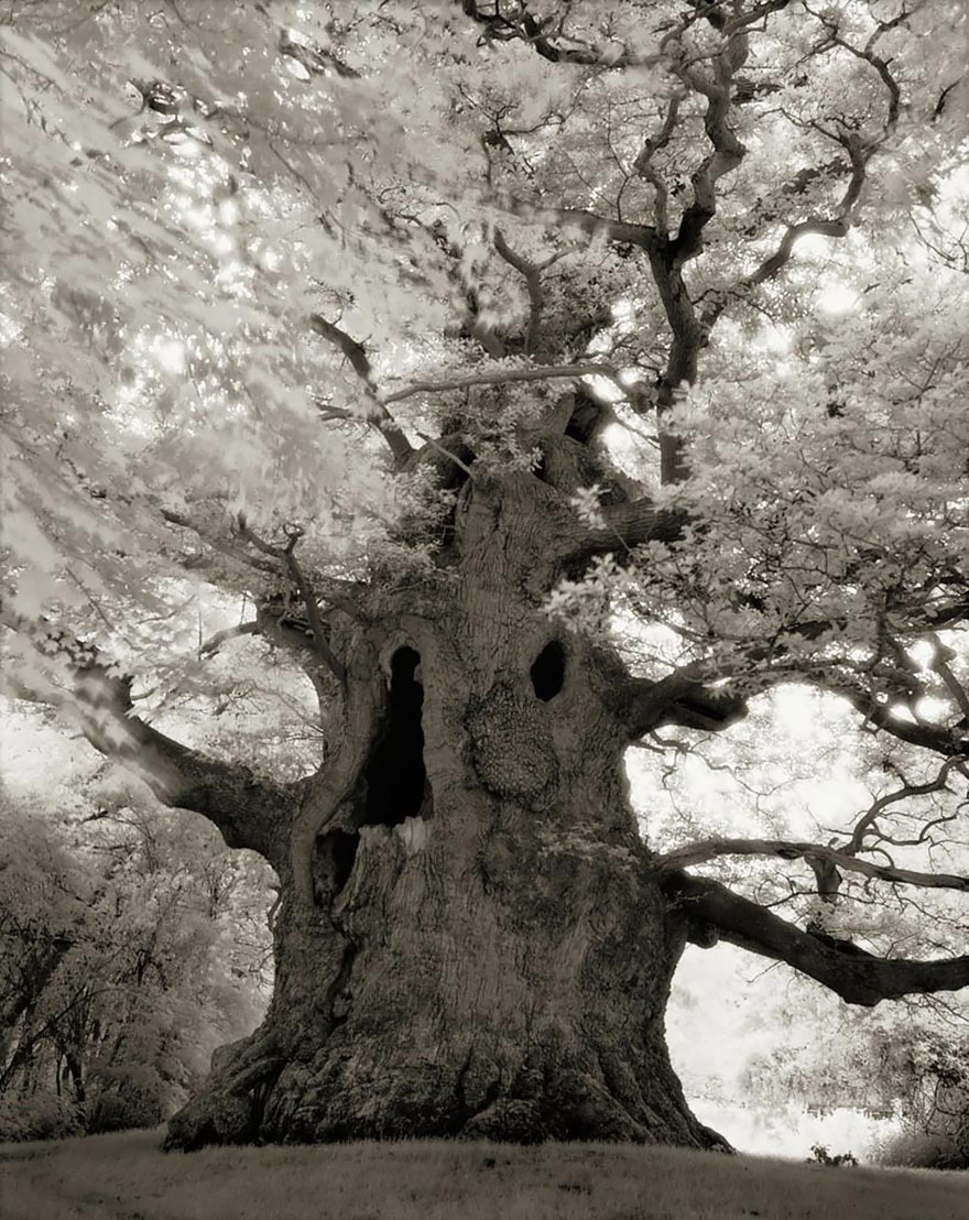 oldest-trees-beth-moon-17