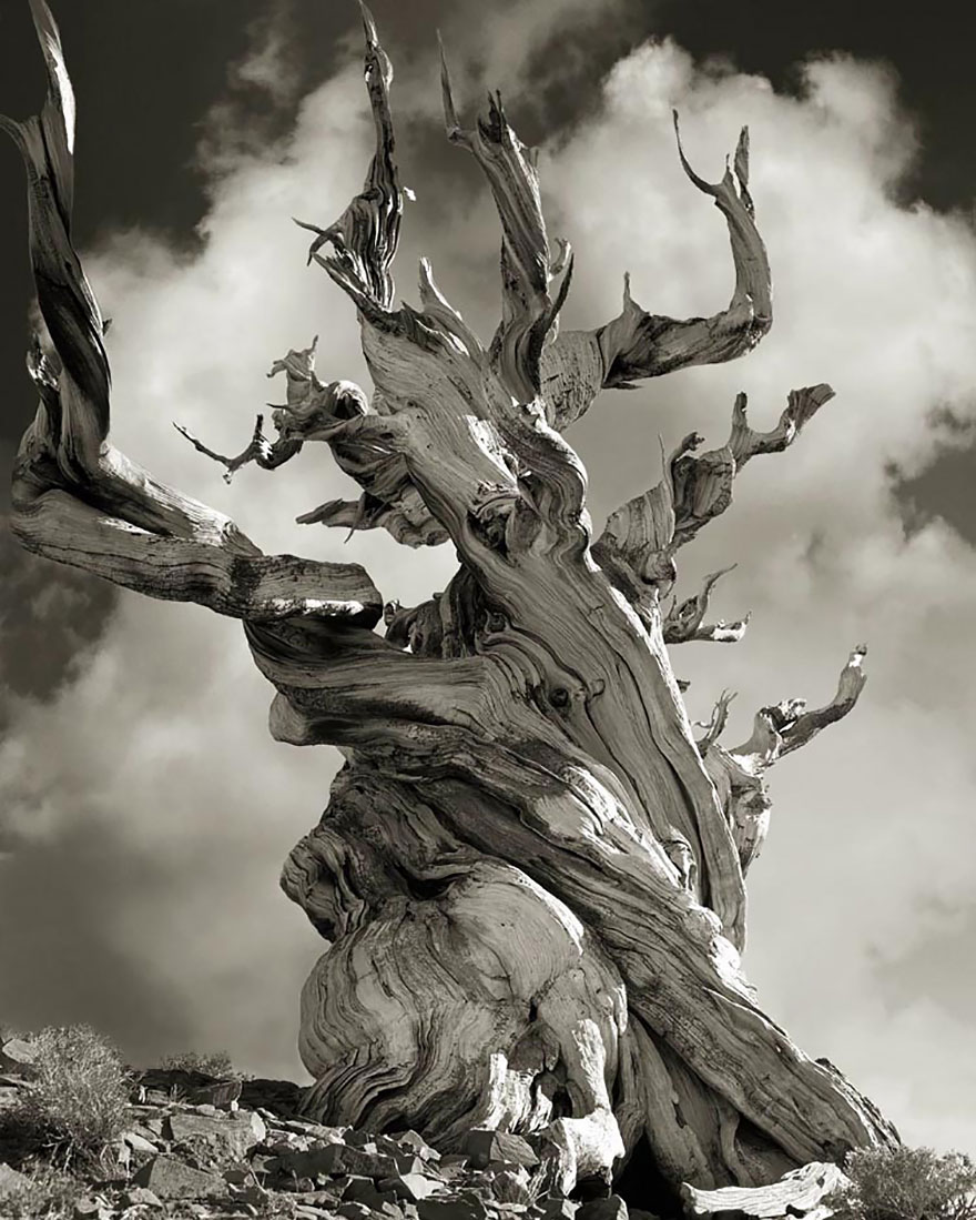 oldest-trees-beth-moon-18